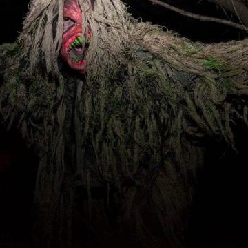 swamp gallery